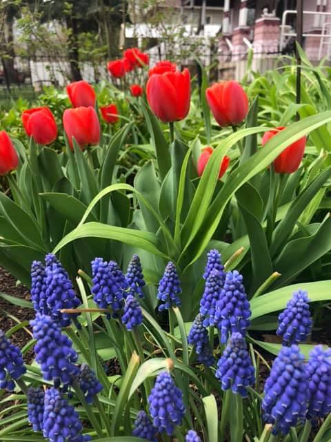 Spring garden Holden House