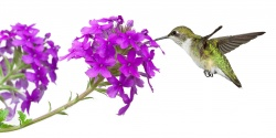 Annual Hummingbird Festival in Cheyenne Canon Park, Colorado Springs, CO